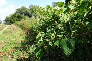 Formation Plantes invasives
